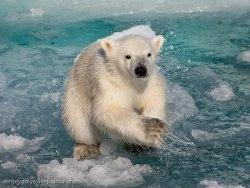 http://newsstreet.ru/uploads/images/00/00/01/2011/12/05/593ff2bb25.jpg