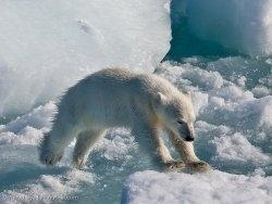 http://newsstreet.ru/uploads/images/00/00/01/2011/12/05/b99b9abd62.jpg