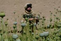 Британский солдат патрулирует маковое поле в Гильменде